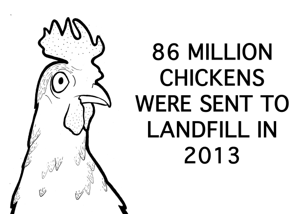 chicken sticker